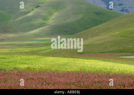 spectacular annual wildflowers on the Piano Grande in Le Marche/Umbria in Italy draw crowds of sightseers from all - Stock Image