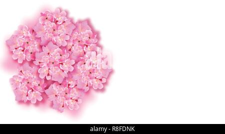Decorative sakura flowers, bouquet, design elements. Can be used for cards, invitations, banners, posters, print design. illustration - Stock Image