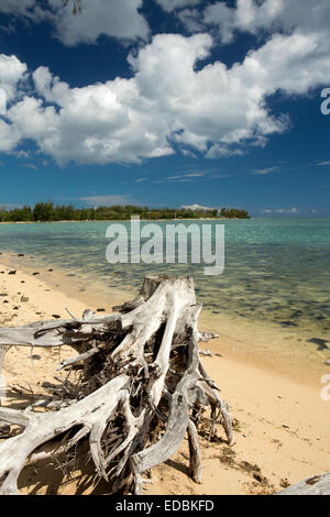 Mauritius, Le Morne, Pointe Corail, sun bleached tree stumps and roots at shoreline - Stock Image