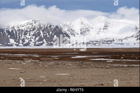 The mountains of Fordlandsletta with reindeer in the foreground taken from Poole-pynten - Stock Image