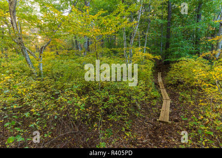 A walking trail in a forest in Marshfield, Massachusetts. Hoyt-Hall Preserve. - Stock Image