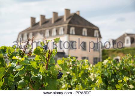 The house at Château de Pommard, Route des Grands Crus Burgundy France - Stock Image