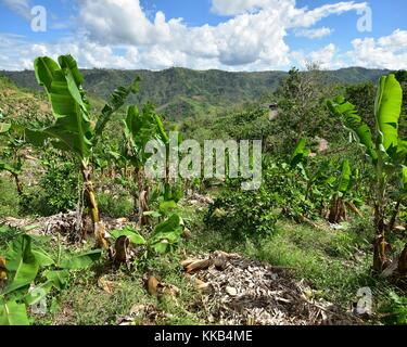 Damaged vegetation from landslides in the aftermath of Hurricane Maria November 2, 2017 in Lares, Puerto Rico.  - Stock Image