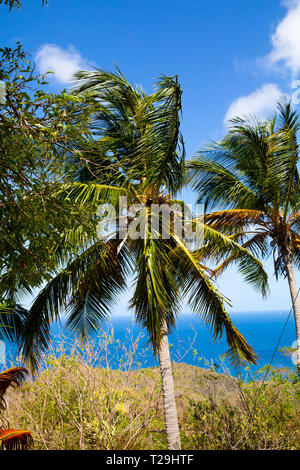 Palm Trees in St Lucia, The Caribbean - Stock Image