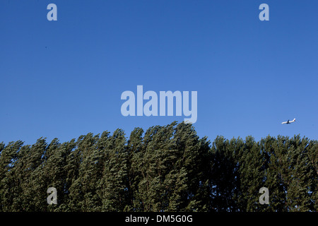 blue sky and trees - Stock Image