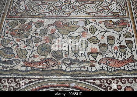 6386.Mosaic floor depicting fish and plants, Hirbet Madras byzantine church, Israel hillcountry area south of Jerusalem. - Stock Image