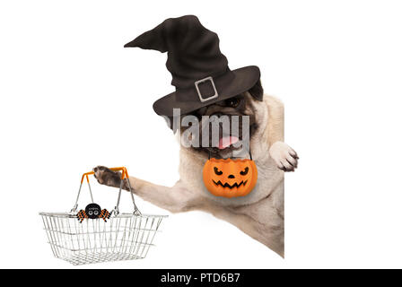 smiling pug puppy dog holding up metal grocery basket, wearing witch hat and carved pumpkin lantern, behind white banner, isolated - Stock Image