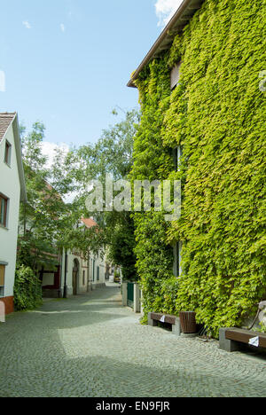 side street with house covered in green climbing plants - Stock Image
