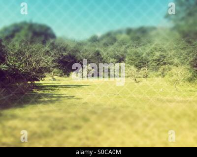 Outdoor grassy field and trees with blue sky, with diamond knit pattern overlay and tilt shift effect. - Stock Image