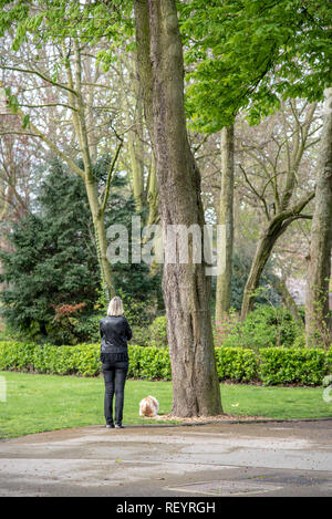 Woman walking her dog in a park - Stock Image