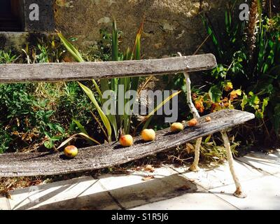 Orchard Bench France - Stock Image