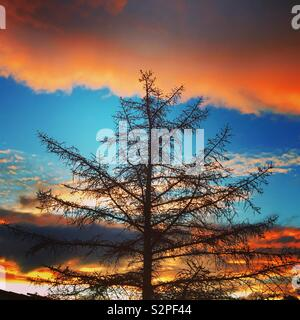 Winter tree silhouette with sunset - Stock Image