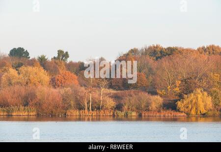 autumn trees beside Brent Reservoir, also known as Welsh Harp Reservoir, SSSI reserve, Brent, London, United Kingdom - Stock Image