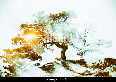 Trees with radiating power - Stock Image