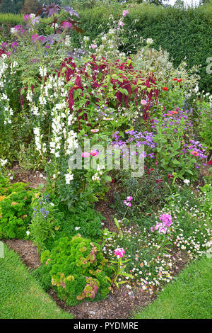 Colourful flower bed with mixed planting including roses, amaranthus, zinnia and antirrhinums - Stock Image