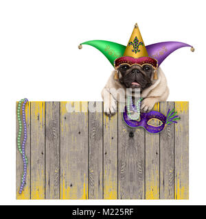 Mardi gras carnival pug dog with  harlequin jester hat and venetian mask hanging on wooden fence, isolated on white - Stock Image