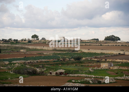 cultivation malta farming - Stock Image