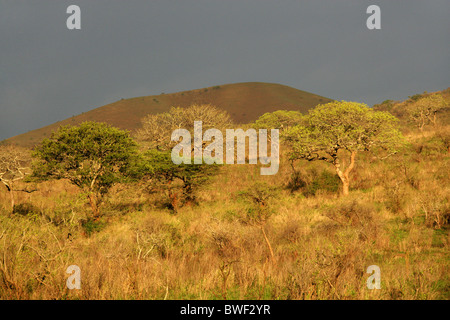 Sunshine After the Storm, Hluhluwe Umfolozi Game Reserve, Kwazulu Natal, South Africa. - Stock Image