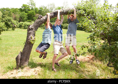 Three ginger haired brothers play and horse around hanging off a tree limb - Stock Image