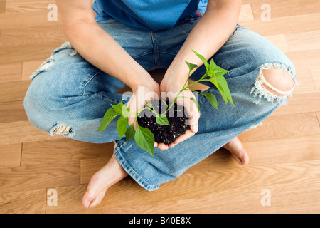 Man sitting on floor holding growing cayenne plant - Stock Image