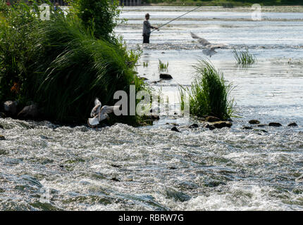 Seagulls and a fisherman catch fish, nature - Stock Image