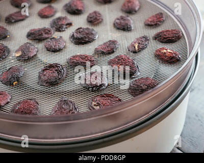 Home made prunes on the rack of a dehydrator. - Stock Image