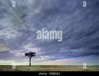 Landscape of tree with dramatic sky. Kenya, Africa. - Stock Image