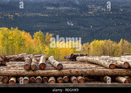 Golden British Columbia Kicking Horse Saw Mill - Stock Image