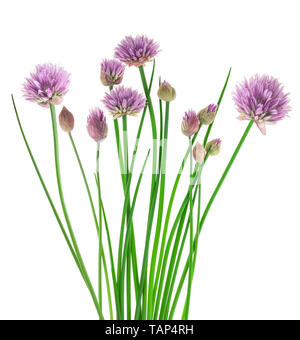 Chives with Flowers isolated on white background - Stock Image