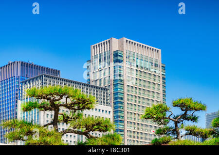 A typical skyline in Tokyo, Japan, with modern skyscrapers offset by topiary trees. Focus on trees. - Stock Image
