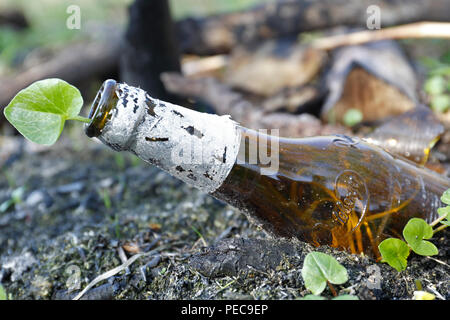 Garbage, glass bottle in nature, plant grows in beer bottle, Mecklenburg-Western Pomerania, Germany - Stock Image