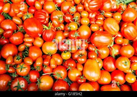 Tomatoes in assorted sizes - Stock Image