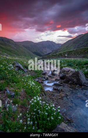 Mountains, creek and wildflowers at sunrise, American Basin, San Juan National Forest, Colorado USA - Stock Image
