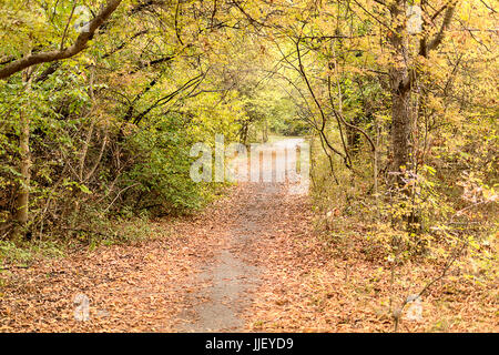 Lonely Path In The Park - Stock Image