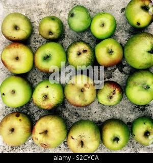 Harvest of apples - Stock Image