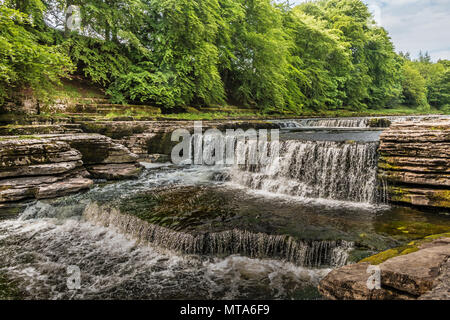 Lower Falls, Aysgarth, Wensleydale, Yorkshire Dales National Park, UK in late spring with very low water level - Stock Image