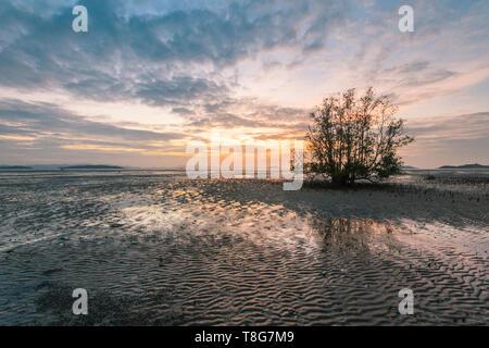 Dawn over the mudflats and mangrove tree, Phang Nga Bay, Phuket, Thailand - Stock Image