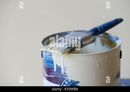 A half used tin of household interior wall paint with a used paint brush lying across the top of it. the brush is - Stock Image
