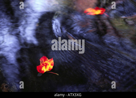 male shadow and leaves in stream water - Stock Image