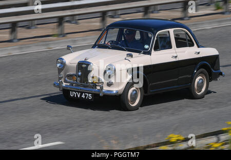 A classic cream and black Wolseley 1500 car drives along the road viewed from above. - Stock Image