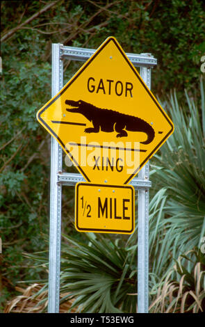 Florida Gulf Coast Lee County Sanibel JN Ding Darling National Wildlife Refuge Gator Crossing sign - Stock Image