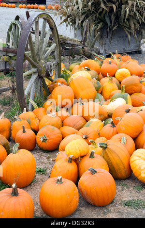 Pumpkin pile ready for purchase at the local farm - Stock Image