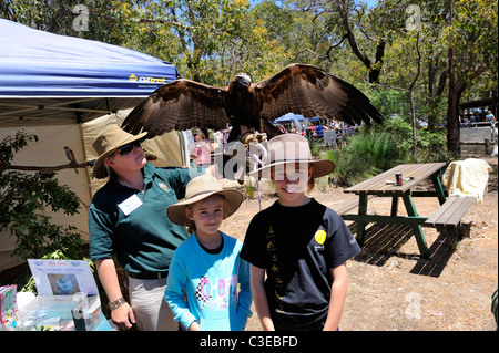 two children (9 years old, 12 years old) with a young Wedge-tailed Eagle (Aquila audax) spreading her wings. Western - Stock Image
