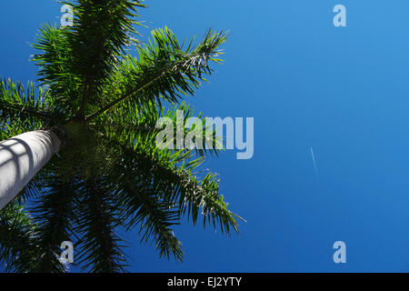 Palm tree against blue sky - Stock Image