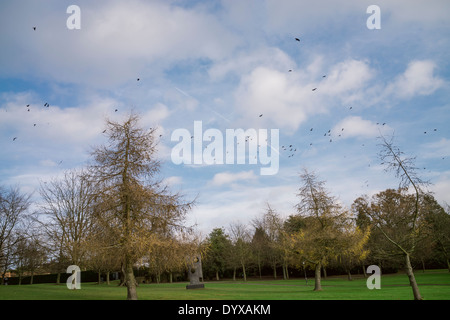 Flying birds at the Yorkshire Sculpture Park. - Stock Image