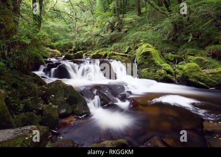 Golitha falls in summer Cornwall Uk - Stock Image