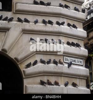 Pigeons on building Royal Exchange Avenue London England - Stock Image