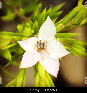 Little flower on macro - Stock Image