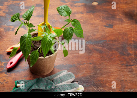 Gardening tools and seedlings on garden table. With copy space - Stock Image