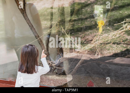 Adorable little girls shows parrot with her finger in glass display at zoo. - Stock Image